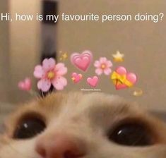 Stupid Funny Memes, Funny Relatable Memes, Cute Funny Animals, Funny Cute, Meme Chat, Look Wallpaper, Iphone Wallpaper, Wholesome Pictures, Cute Love Memes
