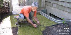 Installation of a moss carpet.