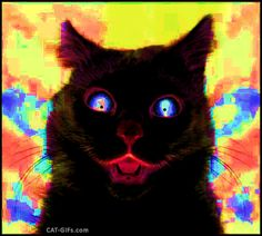 ARTistic Cat GIF with caption • Psycho black Cat is fuck*ng psycho! White Cat ◄►  Black Cat ◄► White Cat ◄► Black Cat