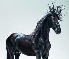 horse horses beautiful art black blackhorse cool