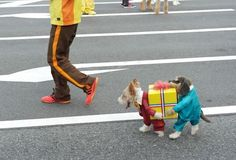 the best dog costume I've ever seen