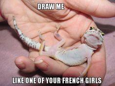 Love this lizard.
