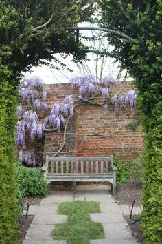 등나무 영국 하트필드하우스에서