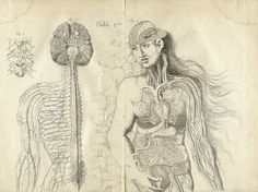 Image result for inaccurate anatomical art
