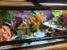Leopard Gecko Setup, Leopard Gecko Cute, Leopard Gecko Habitat, Gecko Terrarium, Reptile Terrarium, Terrariums, Pet Lizards, Reptiles, Uromastyx Lizard