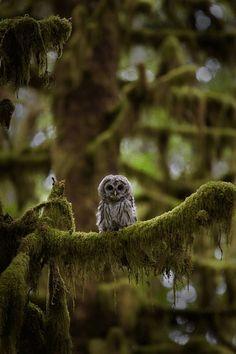 Baby owl …  via Linda Sepiol
