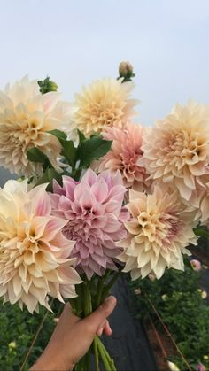 Tried & True Favorite Dahlia Varieties — Flourish Flower Farm – Famous Last Words Shade Flowers, Types Of Flowers, Summer Flowers, Beautiful Flowers, Dahlia Flowers, Cut Flower Garden, Flower Farm, Clematis, Terrarium