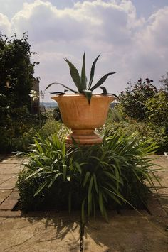 Italian Terrace container - Agave in Alzata with Agapanthas