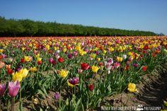 http://www.frenchfriesandapplepie.com/en/woodburn-tulip-fest/
