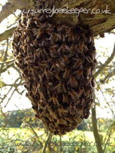 What is a swarm of bees worth…..? Priceless but sadly too many in the UK Government don't appreciate that. Ban neonietenoid insecticides now!