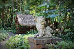 Tamborine Mountain Botanic Gardens is a hidden treasure atop Mount Tamborine, that features a diverse range of native & exotic flora to enjoy. Mt Tamborine, Tamborine Mountain, South Australia, Western Australia, Things To Do In Brisbane, Garden Club, Wisteria, Fantasy Creatures, Botanical Gardens