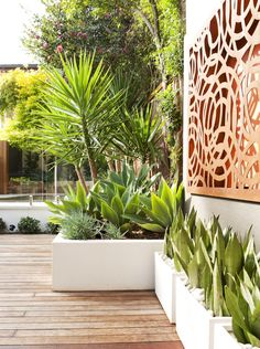 Summer style! Modern garden terrace style! Wonderful laser-cut Screen, crisp white planters, bold clean-shaped green plants! Maybe add lighting behind the screen?