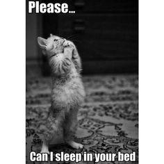 Lutfen... Bu gece senin yataginda uyuyabilir miyim ?  #hibboux #please #kedi #lifestyle #beauty #dream #dreamer #style #bed #life #me #bigdream #sleep