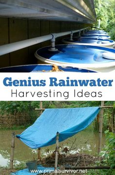 Genius Rainwater Harvesting Ideas for Survival Situations. But going from 100 gallons to 2 gallons per day is going to be a big change. You'll probably end up using more than you realize, and soon your precious stockpile of water will be gone. So you wi Rain Collection System, Rainwater Harvesting System, Water From Air, Survival Food, Emergency Preparedness, Emergency Supplies, Survival Shelter, Homestead Survival, Survival Tips