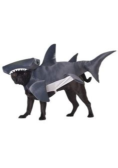 Shark dog costume #pet #halloween