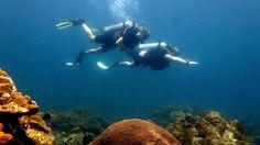 Fun Diving Travel Tours, Scuba Diving, Oriental, Activities, Fun, Diving, Hilarious