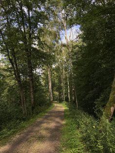 Es gibt wunderschöne Wege in den Isar-Auen bei Landshut. Country Roads, Nice Asses