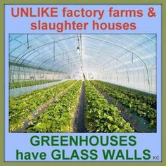 Unlike factory farms and slaughter houses, greenhouses have glass walls.