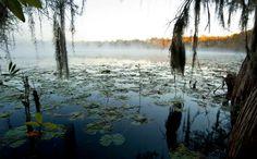 Honey Lake with Rolling Morning Fog