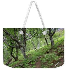 Fresh new green forest, motive printed on bag Spring Forest, Forest Path, New Green, Bag Sale, Printable Art, Woodland, Outdoor Structures, Artists, Fine Art