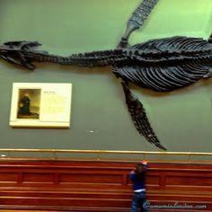 London's Museums: the National History Museum Dinosaurs  www.amuminlondon.com