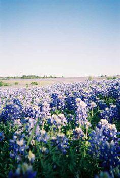 blue fields - Google Search