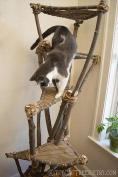 Cat Climbing Tree, Diy Cat Tree, Cool Cat Trees, Cat Playground, Cat Enclosure, Cat Condo, Unique Cats, Cat Room, Cat Accessories