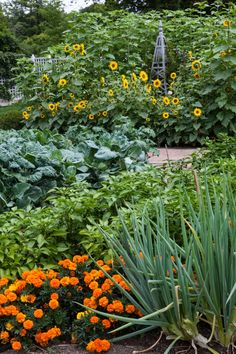 """Carolyne Roehm's garden...""""The cutting garden in summer, an example of green and the range of colors bouncing perfectly against it. Marigold, onions, peppers, sunflowers – all with distinctive shapes and textures yet harmonizing beautifully."""""""