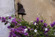 Italy castagneto carducci flowers #CastagnetoCarducci #italy #flowers #violet