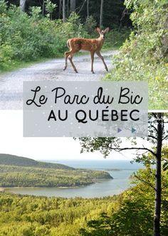 Pour les amoureux de la nature, le Québec est une destination à tomber! Ses grands espaces et ses paysages parsemés de lacs et de forêts sont fantastiques… Mais saviez-vous aussi que la Belle Province déroule … Lire la suite...