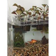 Floating Tray for Aquaponics & Hydroponics $10.00