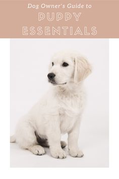A list of all the Puppy Essentials you need Dog Commands Training, New Puppy Checklist, Puppy List, Dog Care, Dog Owners, Your Dog, Labrador Retriever, Congratulations, Bring It On
