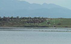 Delta din Carpaţi s-a mutat la Braşov. Locul perfect de relaxare, pescuit şi birdwatching