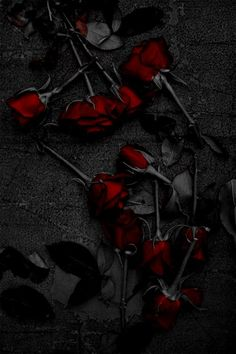 Super Ideas For Photography Dark Beauty Fantasy Gothic Rose Wallpaper, Wallpaper Backgrounds, Gothic Wallpaper, Iphone Wallpaper, Black Flowers Wallpaper, Red And Black Wallpaper, Red Aesthetic, Aesthetic People, Gothic Art