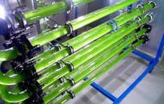 El Biodiésel de Algas es el único biocombustible alternativo capaz de sustituir al petróleo. Definimos como fotobiorreactor a un sistema capaz de generar la fotosintesis de microorganimos (Macrocystis pyrifera) para diversos propositos (Generar Biocombustible)