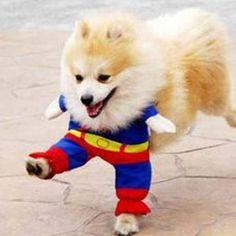 Deguisement animaux : super-héros, personnages de séries et de films, les animaux affichent leurs plus beaux déguisements - Découvrez notre top 100 des animaux déguisés les plus mignons.