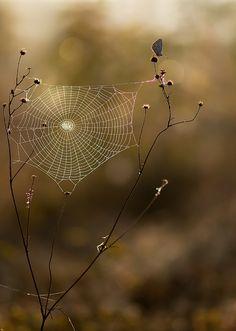 spiderweb by dralik.deviantart.com on @DeviantArt