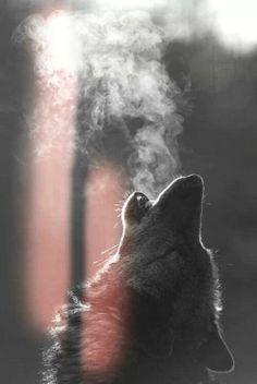 Smoking wolf....via Joze Henrique's photo on Google+