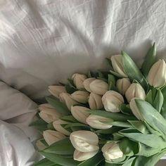 Aesthetic Colors, Flower Aesthetic, White Aesthetic, Aesthetic Pictures, Exotic Flowers, Pretty Flowers, Purple Flowers, Hibiscus Flowers, Aestheticly Pleasing