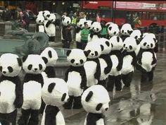 108 Panda's in Trafalgar Square doing Tai Chi to mark the first ever Panda Awareness Week! Sooooooooo cute!
