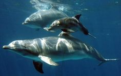 The world of the Sea, Ocean and Animals http://aqua-rium.wixsite.com/theiconic