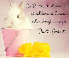 Mesaje cu felicitari de paste sms 1 Life Quotes, Birthday, Happy, Pictures, Ps, Easter, Cards, Hipster Stuff, Happy Easter