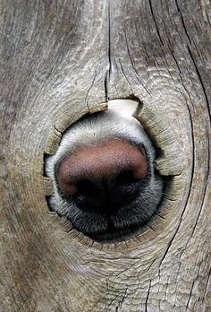 Tem gente que adora  meter o nariz  onde não é chamado.