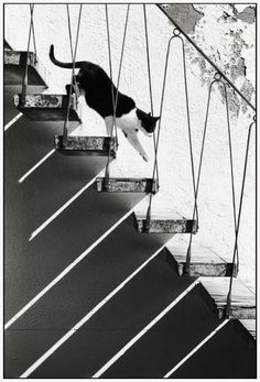 cat on stairs....love all of the lines. great composition.