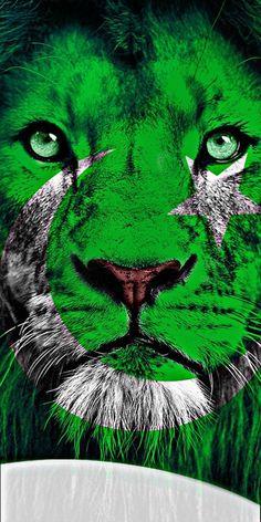 Pakistan Flag Hd, Pakistan Flag Images, Pakistan Pictures, History Of Pakistan, Pakistan Zindabad, Independence Day Pictures, Independence Day Wallpaper, Pakistan Independence Day, Happy Independence