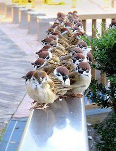 Sweet birds together. Cute Birds, Pretty Birds, Beautiful Birds, Animals Beautiful, Animals And Pets, Baby Animals, Cute Animals, Exotic Birds, Colorful Birds