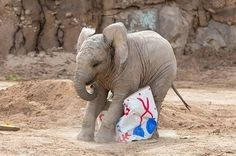 21 Baby Elephants Having The Best Day Ever