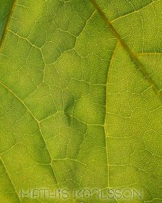 MOTHER DIRTH  Took these amazing photos a little over a week ago. More coming later!  #nature #leaf #artphotography #abstractphotography #mobilephotography #minimal #artphoto #closeup #macro #texture #green #fineart #contemporary #contemporaryart #abstract #abstractart #gallery #artgallery #art #aesthetic #graphicdesign #modern #modernart #digital #digitalart #graphic #creativegrammer #minimalism42 #minimalistgrammer #bpa_nature
