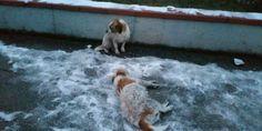 Teramo: cane al gelo veglia il corpo del suo amico e rischia assideramento
