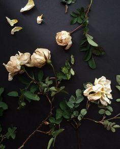 antique rose.